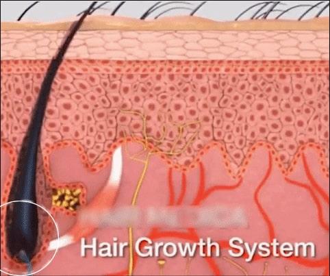 raiz do cabelo