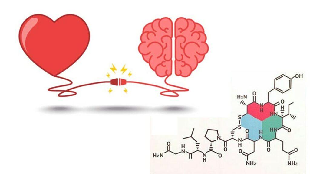 ocitocina para que serve